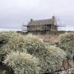 view with lichen